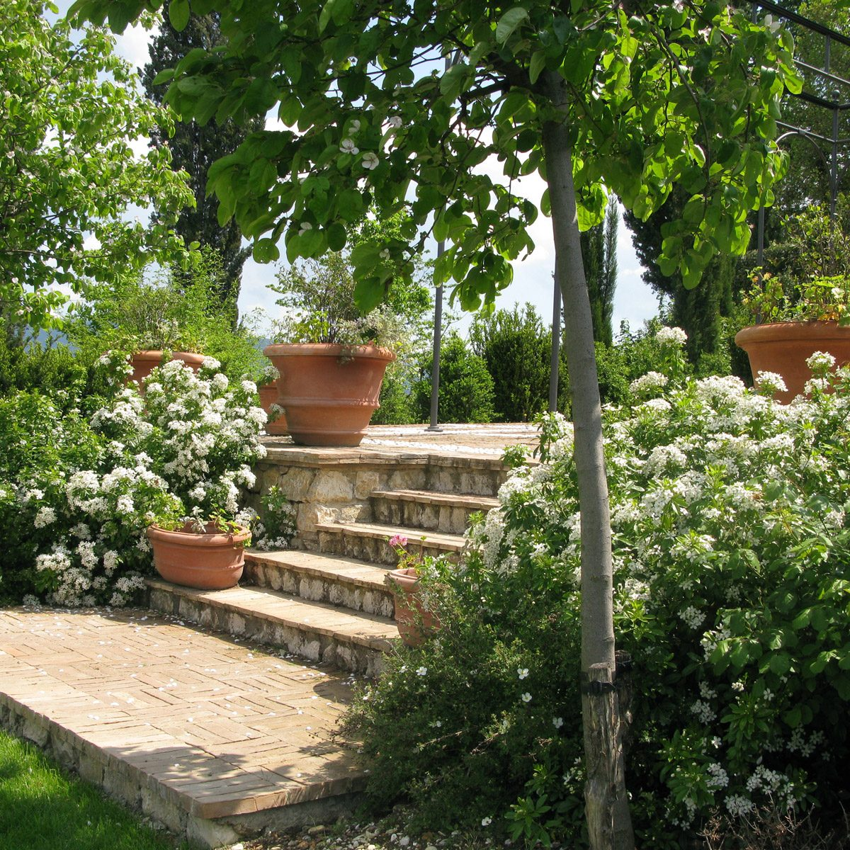 PPO_X-New-Terrace-good-IMG_5481--Arbour--Steps,-paving-